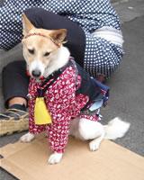 dog_sanjamatsuri.jpg